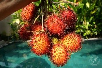 Balinese lichees! What is slow travel? And why you should!  #local #fruit #discovery
