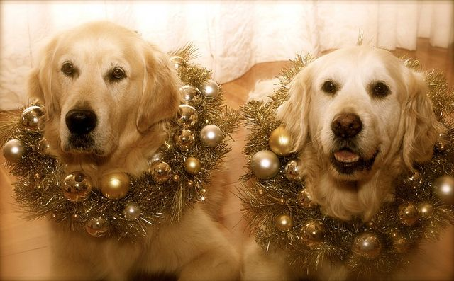 sweetChristmas Cards, Christmas Pictures, Girls Pets, Sweets Baby Dogs, Cute Cats, Sweets Pets Boys, Yellow Labs, Boys Pets, Baby Cats