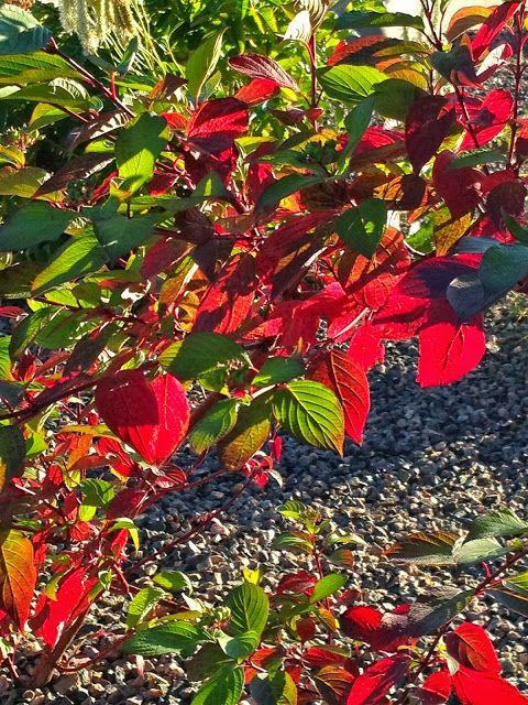 wee blether: September eveningsunlight.The garden looked so be...
