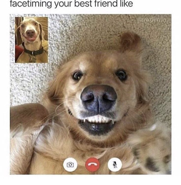 This is relatable because I once FaceTimed my friend on the floor lol
