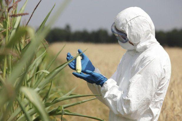 Monsanto dostanie po kieszeni – PE zalecił zakaz stosowania glifosatu