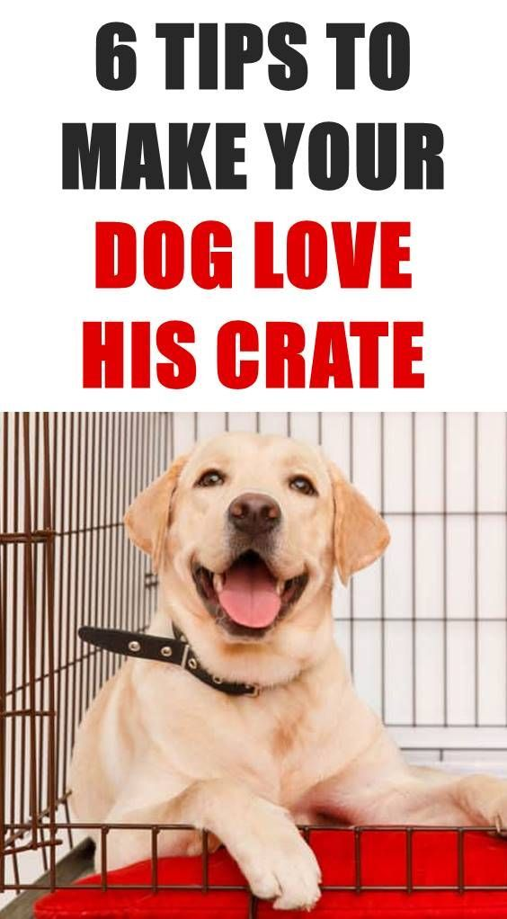 A Crate Or Kennel Can Give Dogs A Sense Of Security And Can Be A