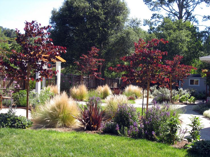 11 Trees for Brilliant Fall Color