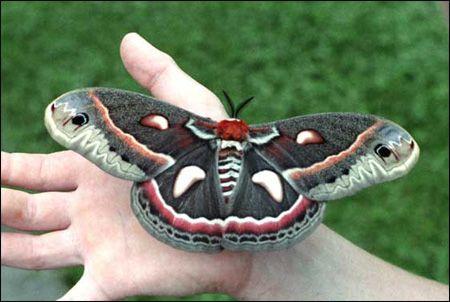moth tattoo inspiration