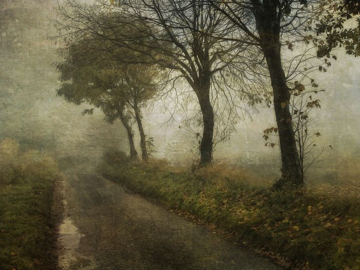 Sarah Jarrett   photographs, surprisingly made to look like well done paintings.