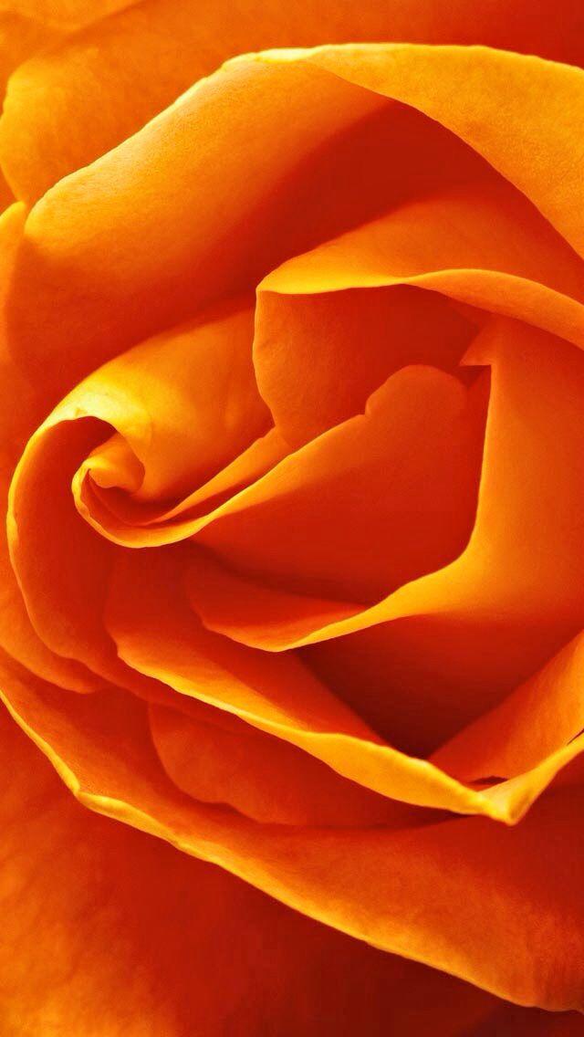Oooh la la orange