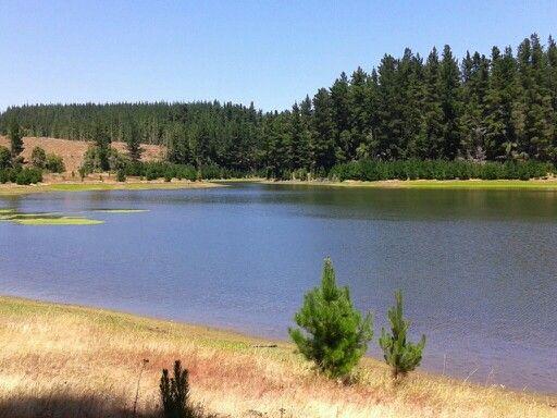 Laguna escondida entre los bosques de Constitución, Chile 2015