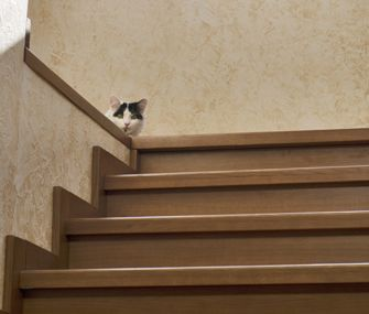 Cats love to be alone, never need playtime and don't get along with other cats. True? False! Find out why.