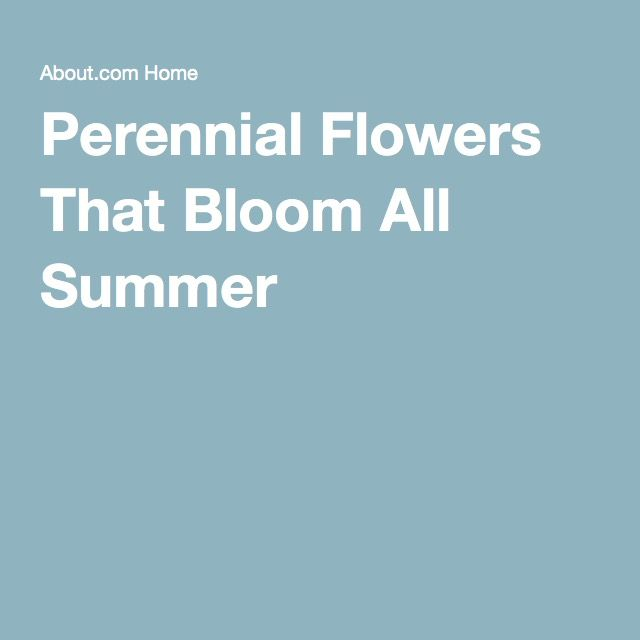 Flowers That Bloom All Summer Long Perennials Flower