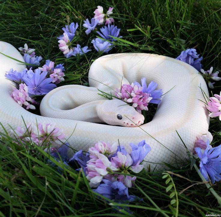 Картинка змея с цветком на голове любоваться подружкам