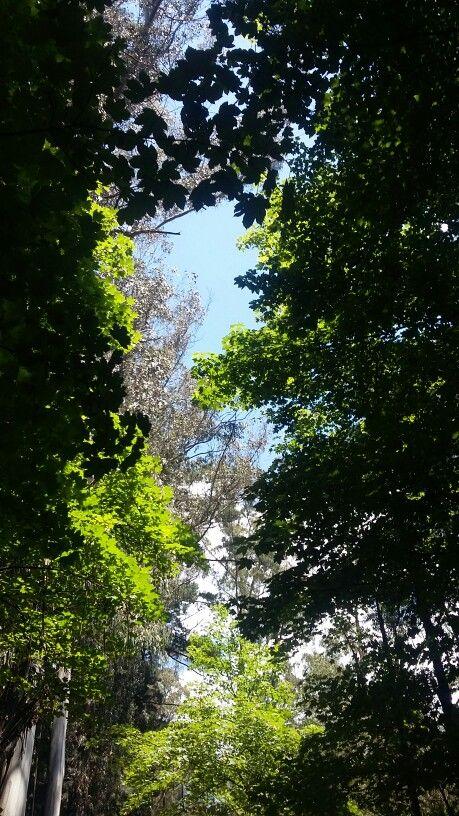 Parque Isabel Riquelme en Lautaro, Araucanía