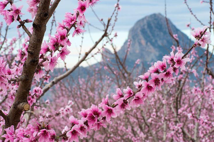 Floración de Cieza