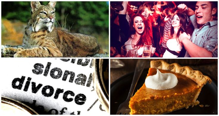 Divorce laws, powdered alcohol and pumpkin pie-- don't miss these ten new Illinois laws going into effect in 2016.