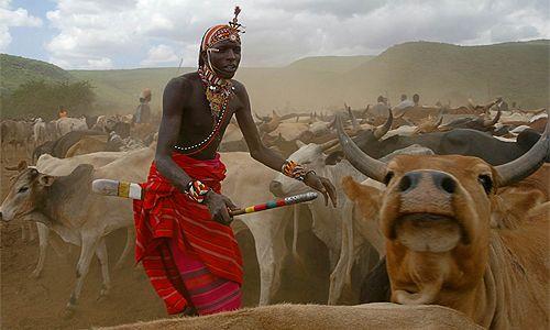 Pastorizia e dintorni: cosa c'è di più intrigante della Transumanza dei Maasai per aprire nuovi scenari alla nostra curiosità? La transumanza nei secoli non è solo …
