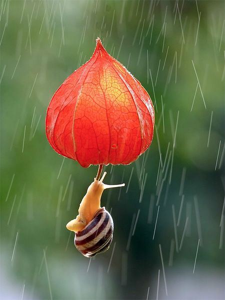 Snail in macro photography by Vyacheslav Mishchenko