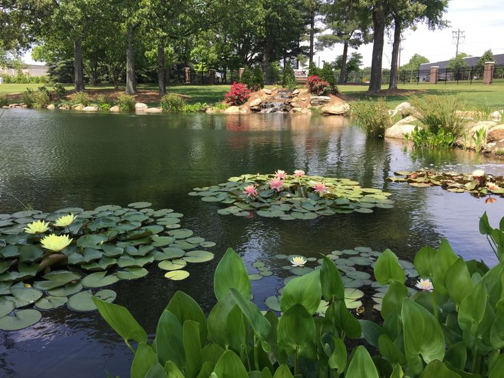 29 best water gardens fountains images on pinterest for Farm pond maintenance