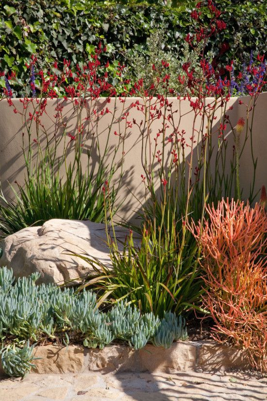 Layered naturalistic plants with vivid drought tolerant plantings–like red pencil trees, toyon, and 4 different types of sage that appear as though they've always been a part of the terrain.