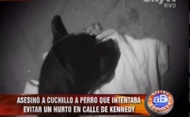Este perro murió como todo un héroe. ¡Mira por qué!