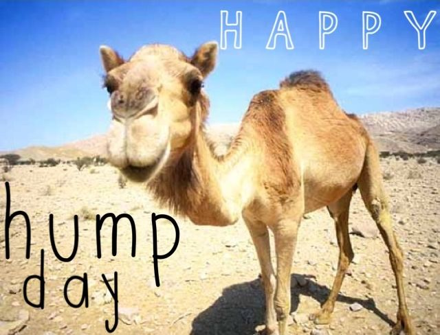 Happy Hump Day quotes quote days of the week wednesday ...