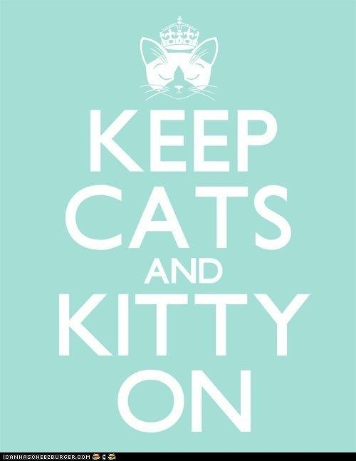 : Crazy Cats, Kitty Cats, Catsss, Crazy Cat Lady, Cats Kittens
