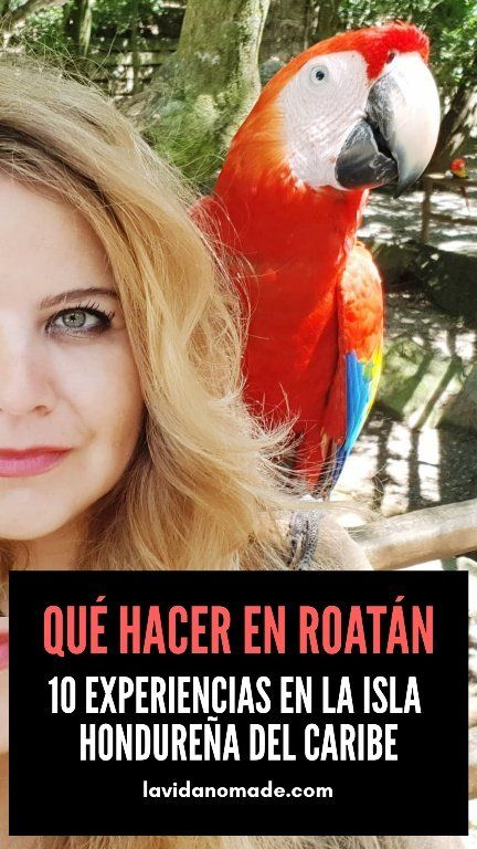 Qué hacer en Roatán, 10 experiencias en la isla hondureña del Caribe   La Vida Nómade  #Honduras #Roatan #Caribe