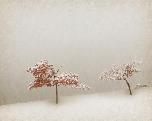 alone in a blizzard