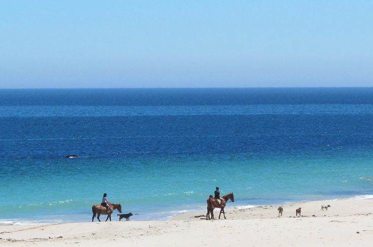 HORSES & HOUNDS - Whenever the horses pass, all the dogs in the vicinity rush down to escort them from one end of the bay to the other ~ very cute!!!  http://www.absolutebeach.co.za/  #beachlife #westcoast #southafrica #horses