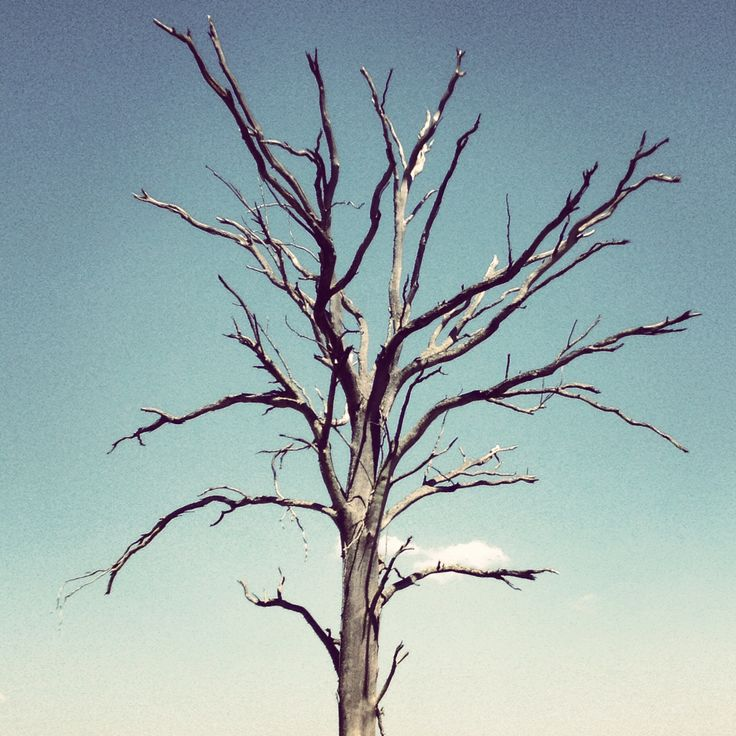 Dead tree. Beautiful tree. Branch out.