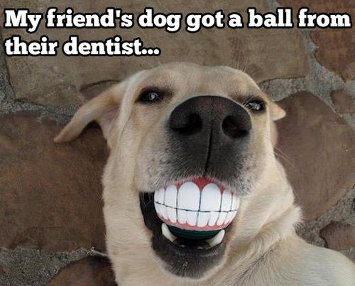 What a fetching smile. #dentist http://www.rockycreekdentalcare.com