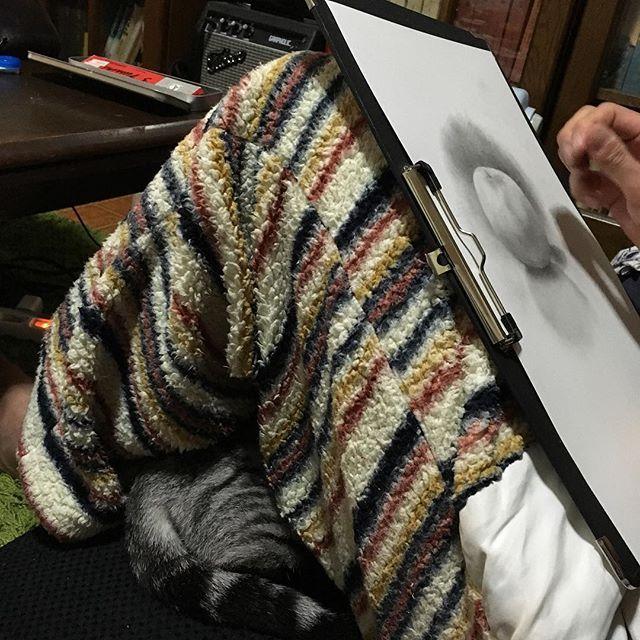 膝がだめなら膝下だ! #ランの気持ち #同じアングル、同じ服ですが #今現在です #愛猫 #モコモコパジャマ  #寒がり