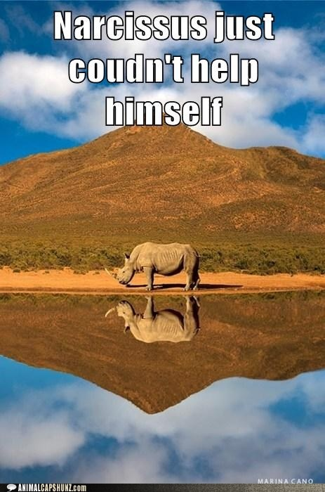 """Funny Animal Captions - Most Retellings Omit the """"Rhino"""" Detail"""