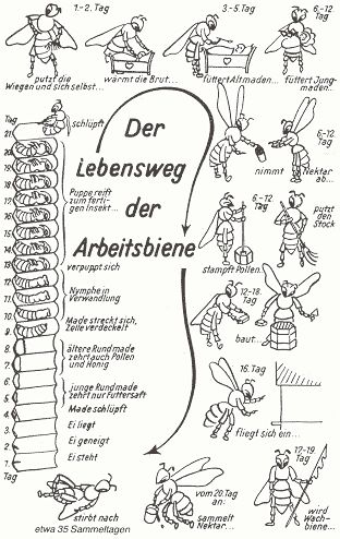 2847 best Deutsch als Fremdsprache images on Pinterest