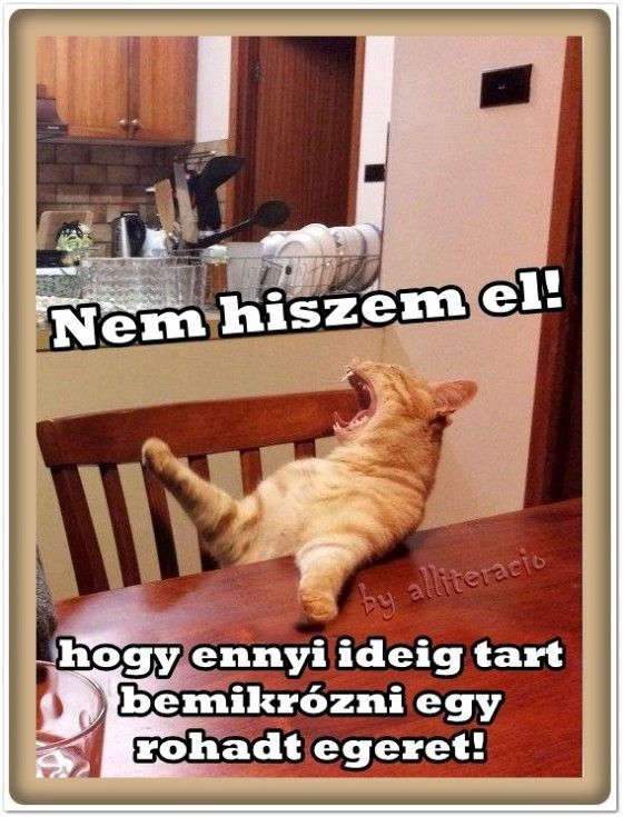humor, vicces_képek, macska, reggeli, egér,
