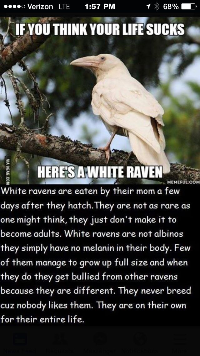 Save White Ravens They Re Beautiful Too Storybook By