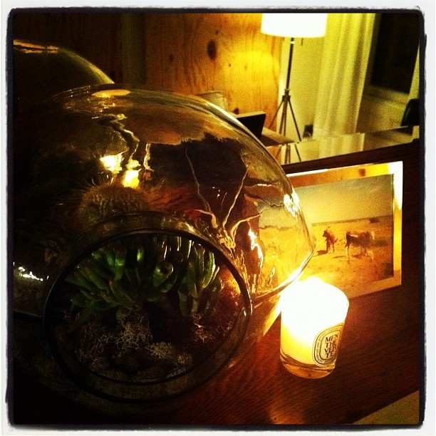 Curacao-inspired Southwestern terrarium. Late-night projects.