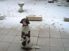 Comment bien passer l'hiver avec mon chien et mon chat ? - Chien