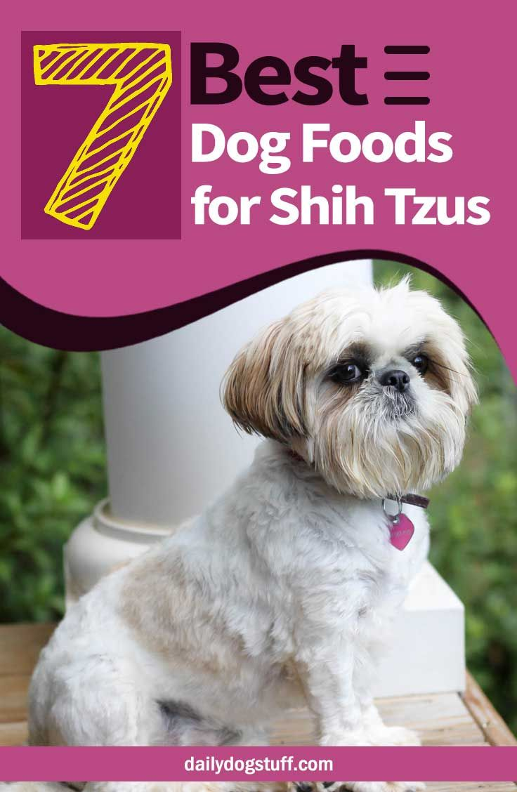 Top 7 Best Dog Foods For Shih Tzus 5 Dry 2 Wet Options Best