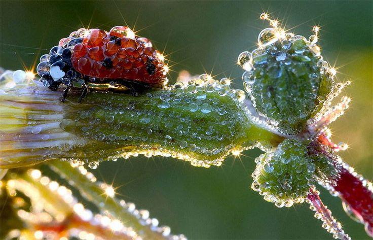 Glistening ladybug.