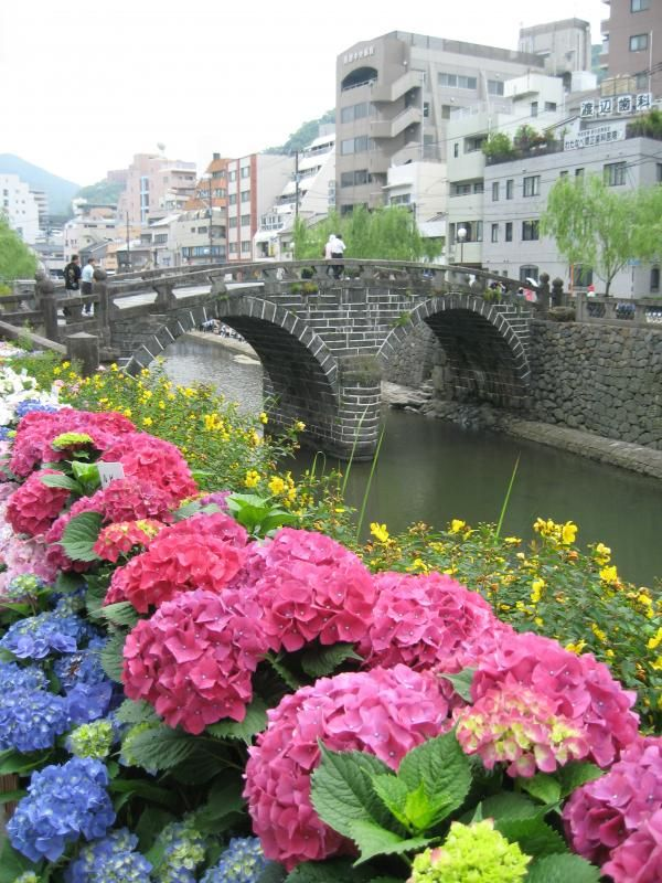 Hydrangea with Spectacles Bridge Nagasaki City Flowers / Old buildings and streets