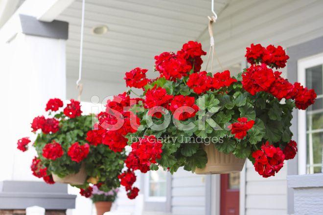 Подвесные Цветочные корзины