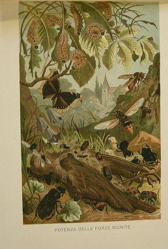 -Potenza delle forze riunite. s.d. (ma 1900 ca.). Storia naturale - Etologia - Animali -  Insetti - Farfalle - Bruchi - Larve - Scarafaggi - Api - Stampa - Scienza