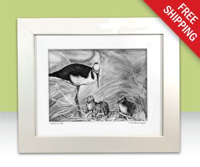 A limited edition print [100] of a parent black-winged stilt watching over the chicks. I saw these adorable little chicks darting around at Currumbin Wildlife Sanctuary and just had to draw them.
