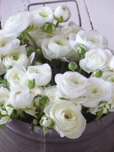 Best white ranunculus ideas on pinterest