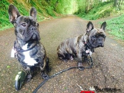 Rocky (rechts) und Mailo (links) unsere beiden Stromies