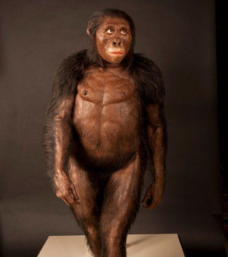 3,2 Ma: Lucy ~ John Gurche, Cleveland Museum.. - Lucy est le surnom d'un fossile relativement complet d'un Hominidé préhistorique de l'espèce Australopithécus afarensis découvert en Ethiopie en 1974.
