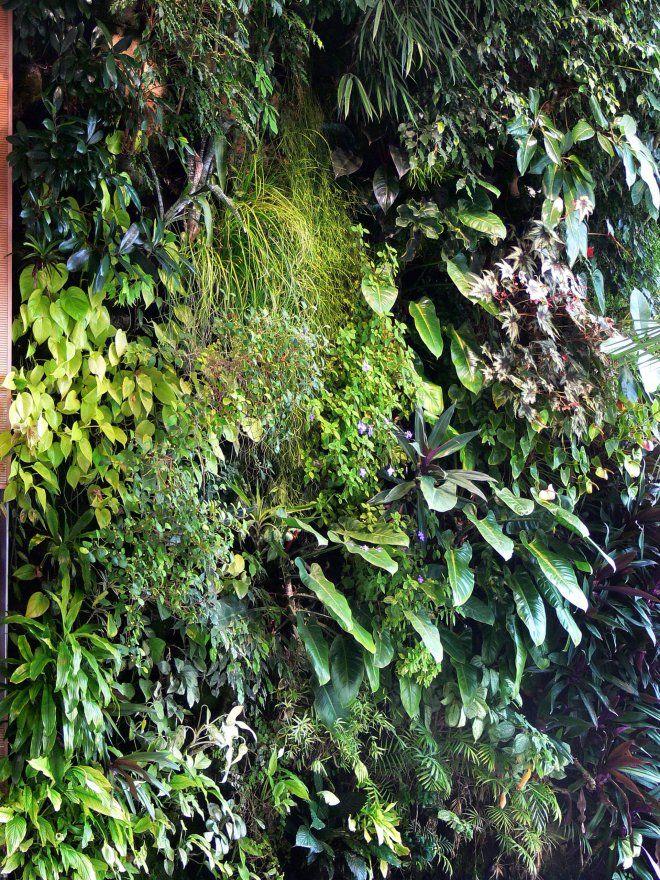 Le mur végétal antibruit