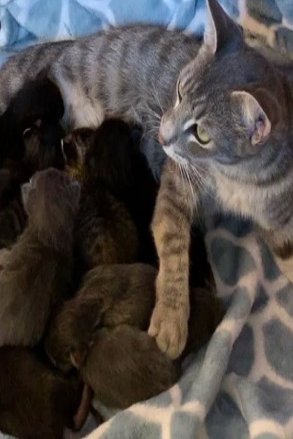 Stray Cat Found Help Just In Time For Her 8 Kittens She Can T Stop Purring Video Cute Animals Cute Cats Kittens