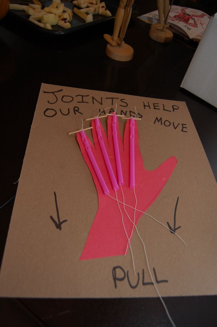 JOINT & TENDON HAND MODEL - Cardboard, paper, straws (need to cut notches), and string make for an easy finger joint demo