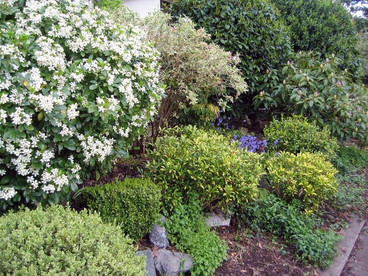 Ideal Find the plete information about selecting planting and caring for Shrubs here Please