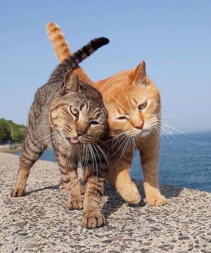 Sbadigli and tongue out … for FIERI cats